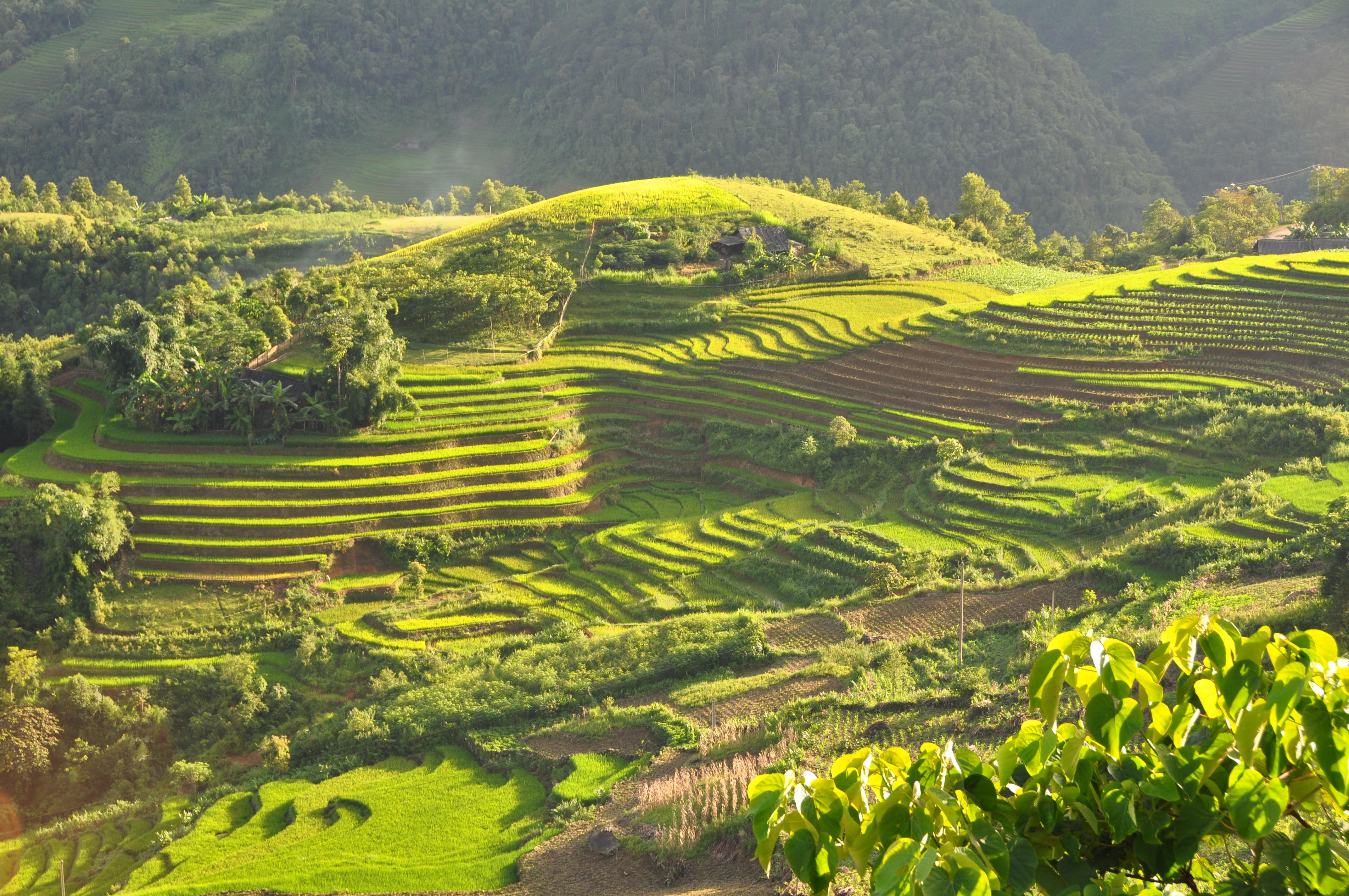 Beste reistijd Vietnam